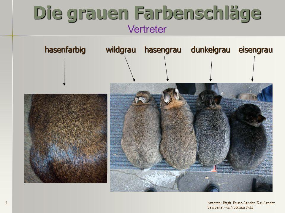2Autoren: Birgit Busse-Sander, Kai Sander bearbeitet von Volkmar Pohl Die grauen Farbenschläge Grau ist ein beliebter Farbenschlag – aber was meint der Züchter, wenn er von seinen grauen Tieren spricht.