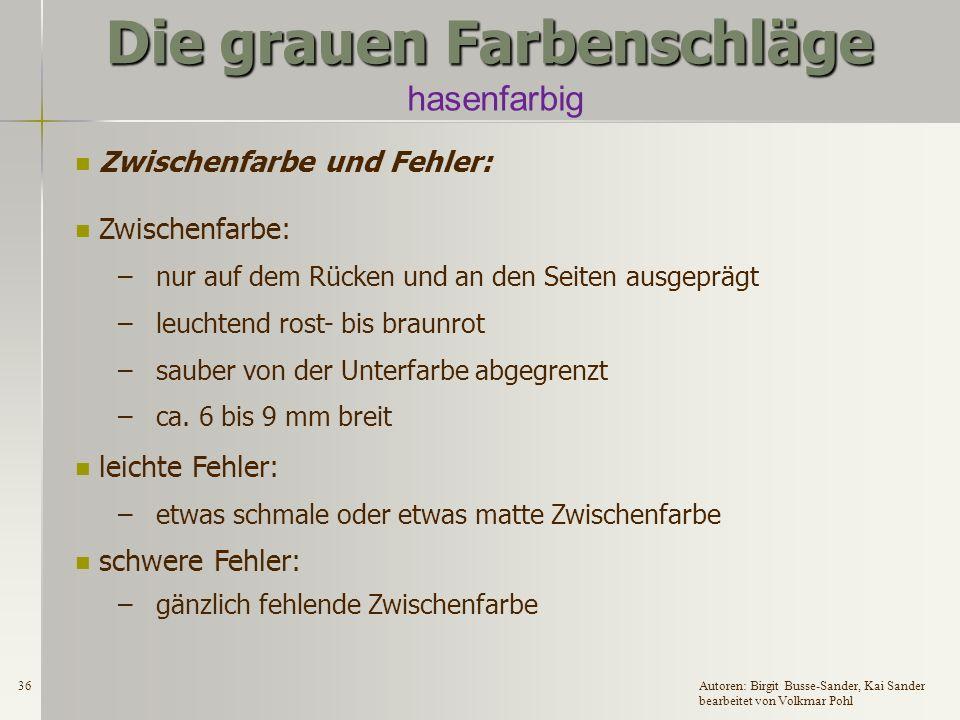 35Autoren: Birgit Busse-Sander, Kai Sander bearbeitet von Volkmar Pohl Die grauen Farbenschläge Bauchdeckfarbe