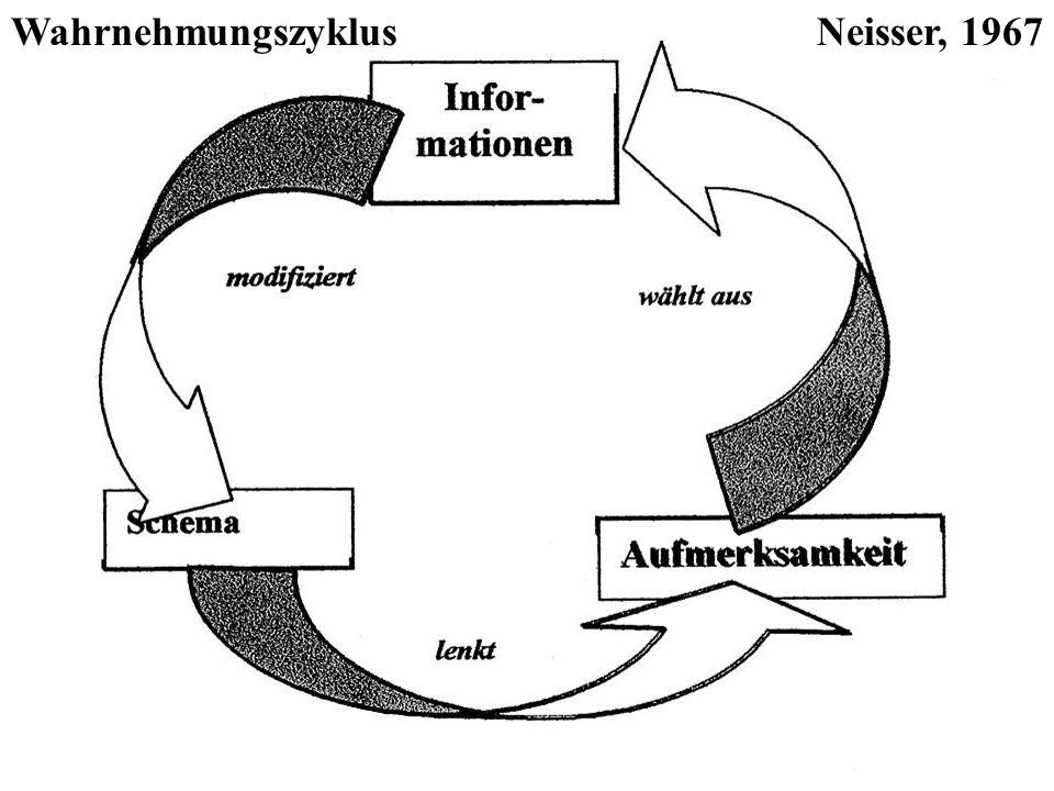 Wahrnehmungszyklus Kognitive Schemata lenken die Aufmerksamkeit Informationen der Umwelt werden selegiert Schemata werden bestätigt oder verändert