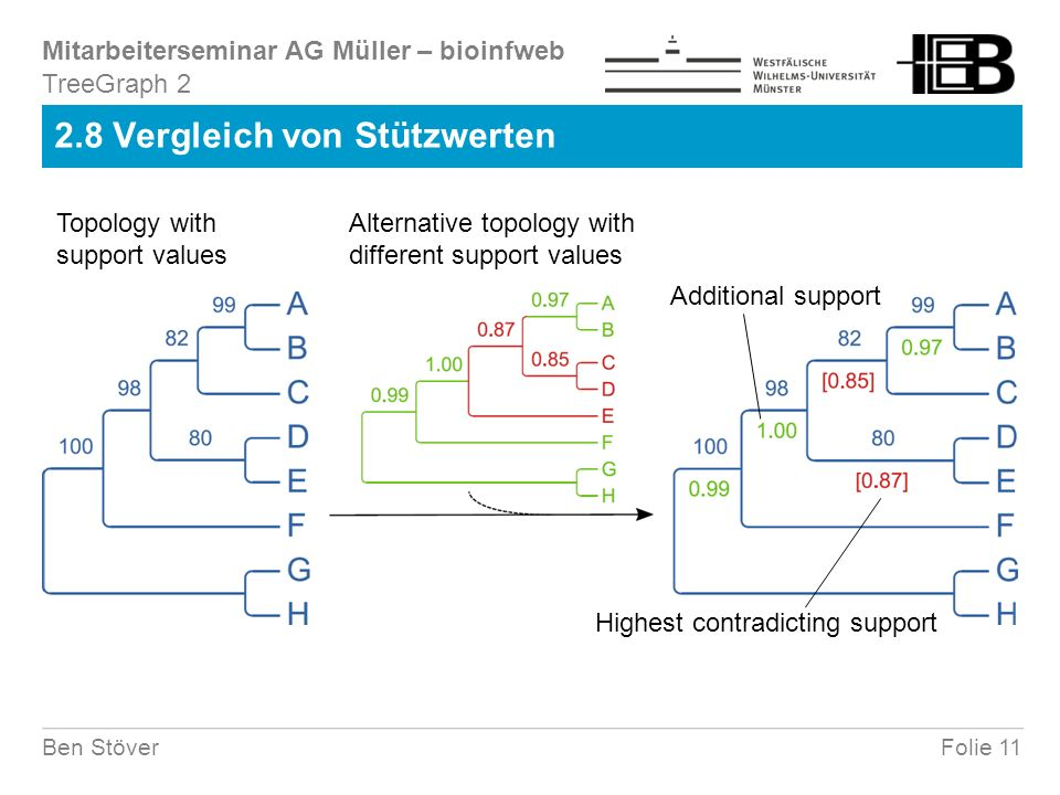 Mitarbeiterseminar AG Müller – bioinfweb Folie 11Ben Stöver 2.8 Vergleich von Stützwerten Topology with support values Alternative topology with different support values Additional support Highest contradicting support TreeGraph 2