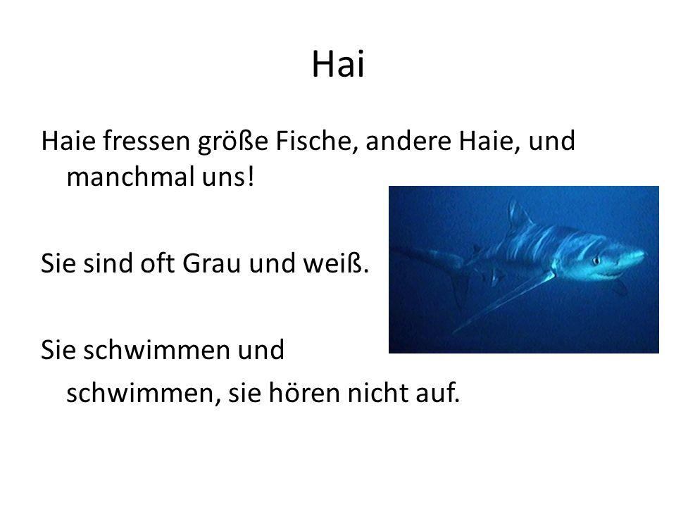 Hai Haie fressen größe Fische, andere Haie, und manchmal uns! Sie sind oft Grau und weiß. Sie schwimmen und schwimmen, sie hören nicht auf.