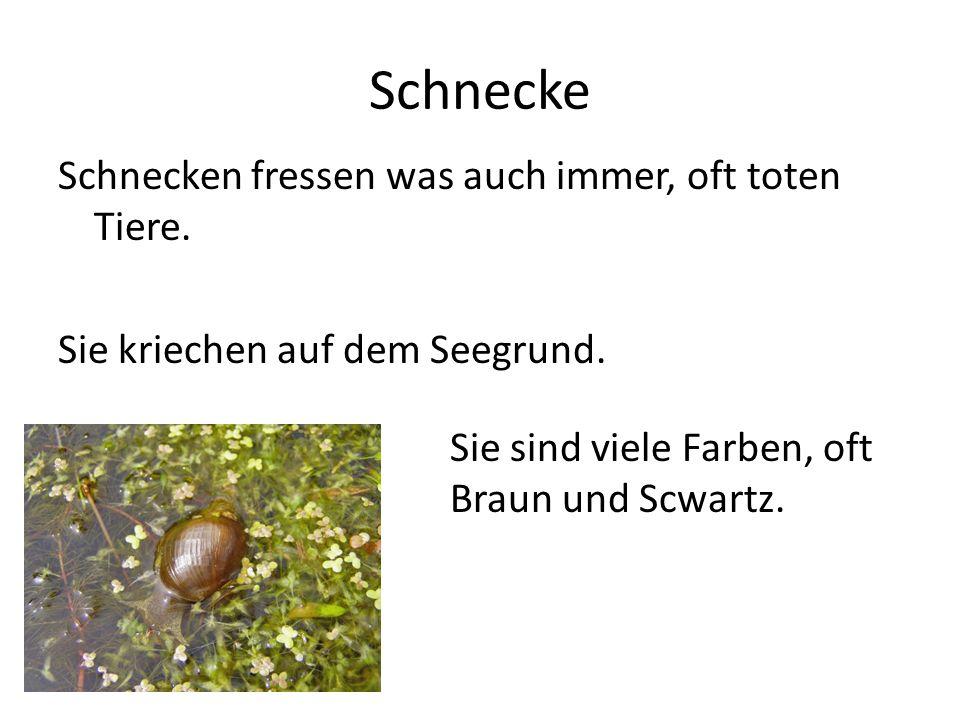 Seegurke Seegurken sind nicht mobil.Sie haben keine Beine oder Arme, und können nicht schwimmen.