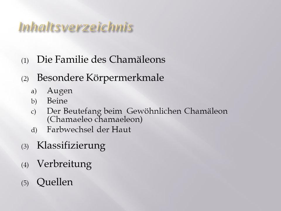 (1) Die Familie des Chamäleons (2) Besondere Körpermerkmale a) Augen b) Beine c) Der Beutefang beim Gewöhnlichen Chamäleon (Chamaeleo chamaeleon) d) F