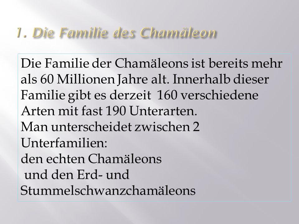 Die Familie der Chamäleons ist bereits mehr als 60 Millionen Jahre alt. Innerhalb dieser Familie gibt es derzeit 160 verschiedene Arten mit fast 190 U