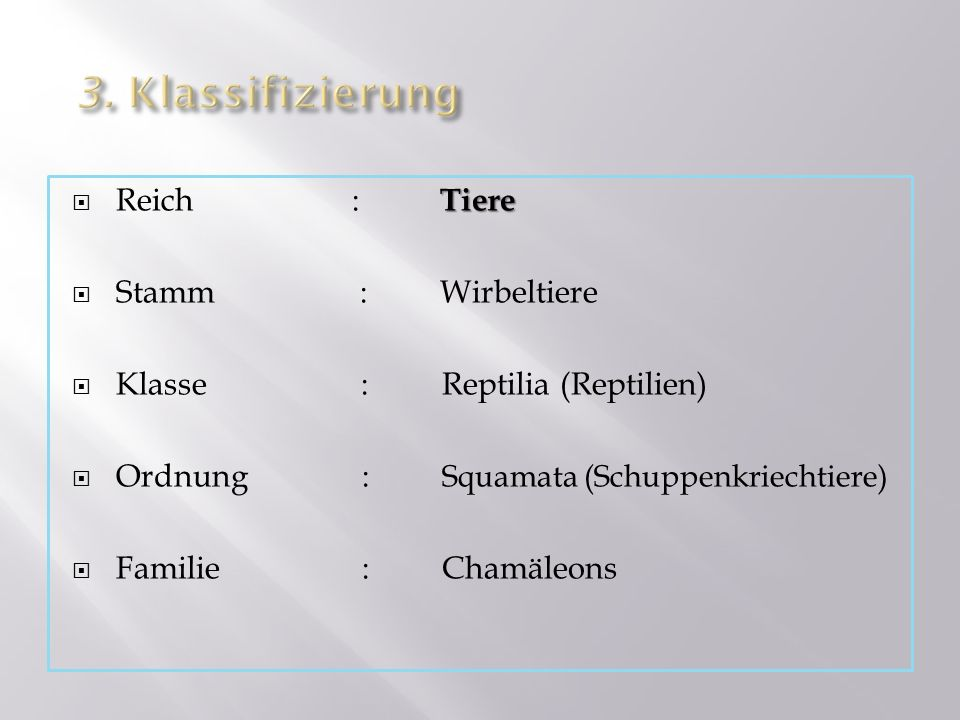 Tiere Reich: Tiere Stamm: Wirbeltiere Klasse:Reptilia (Reptilien) Ordnung : Squamata (Schuppenkriechtiere) Familie :Chamäleons