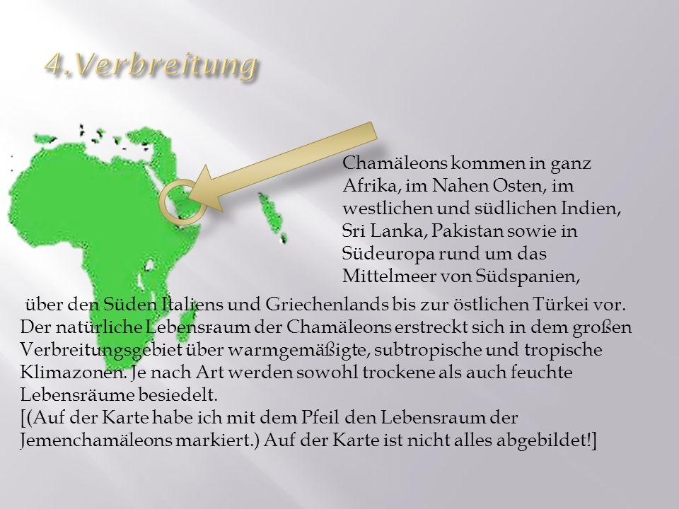 über den Süden Italiens und Griechenlands bis zur östlichen Türkei vor. Der natürliche Lebensraum der Chamäleons erstreckt sich in dem großen Verbreit