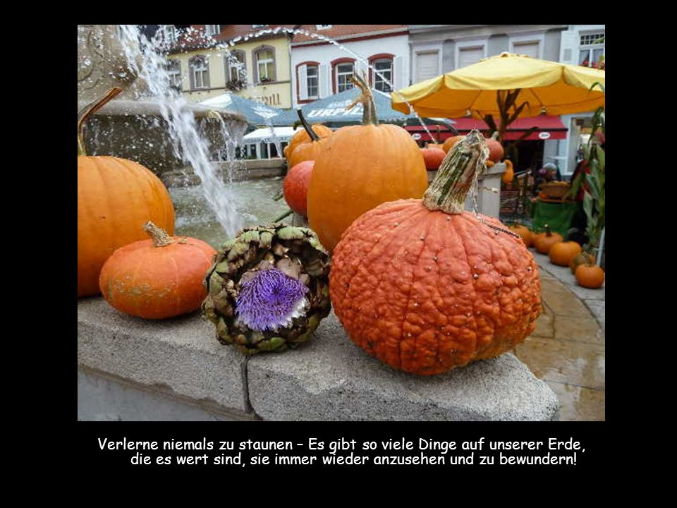 Des Lebens Herbst kann wunderschön sein – denn wer hinter den Sinn seines eigenen Lebens gekommen ist, dem kann man nichts mehr vormachen – Genieße je