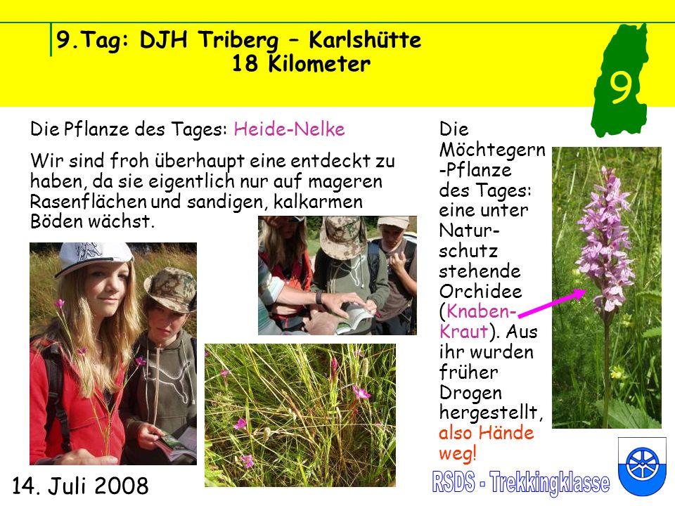 9.Tag: DJH Triberg – Karlshütte 18 Kilometer 14. Juli 2008 9 Die Pflanze des Tages: Heide-Nelke Wir sind froh überhaupt eine entdeckt zu haben, da sie