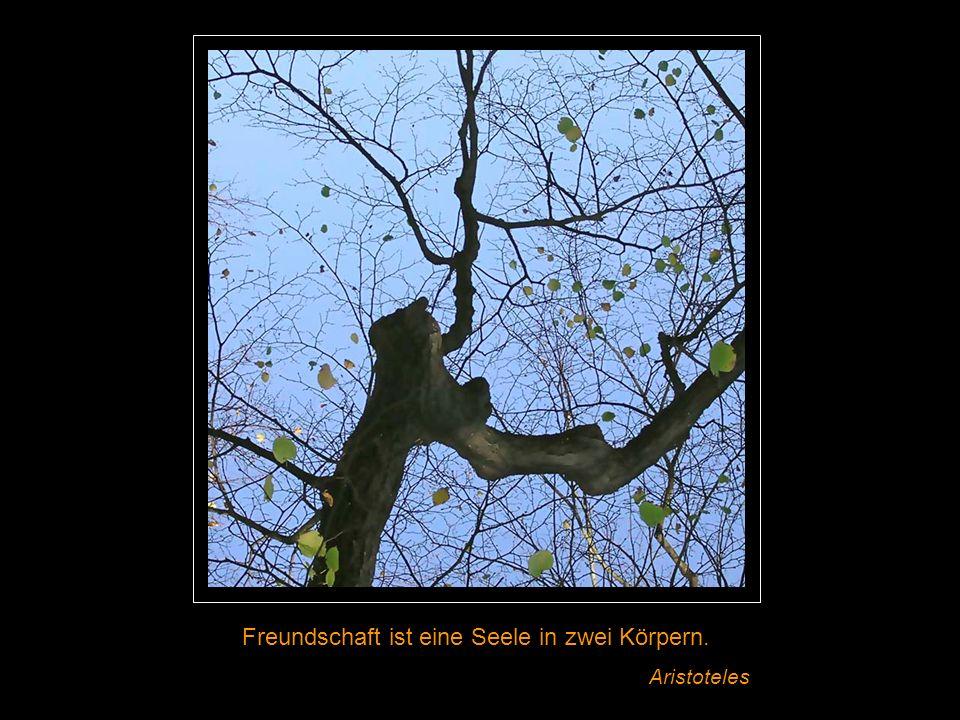 Es ist unglaublich, wieviel Kraft die Seele dem Körper zu verleihen mag. Wilhelm von Humboldt