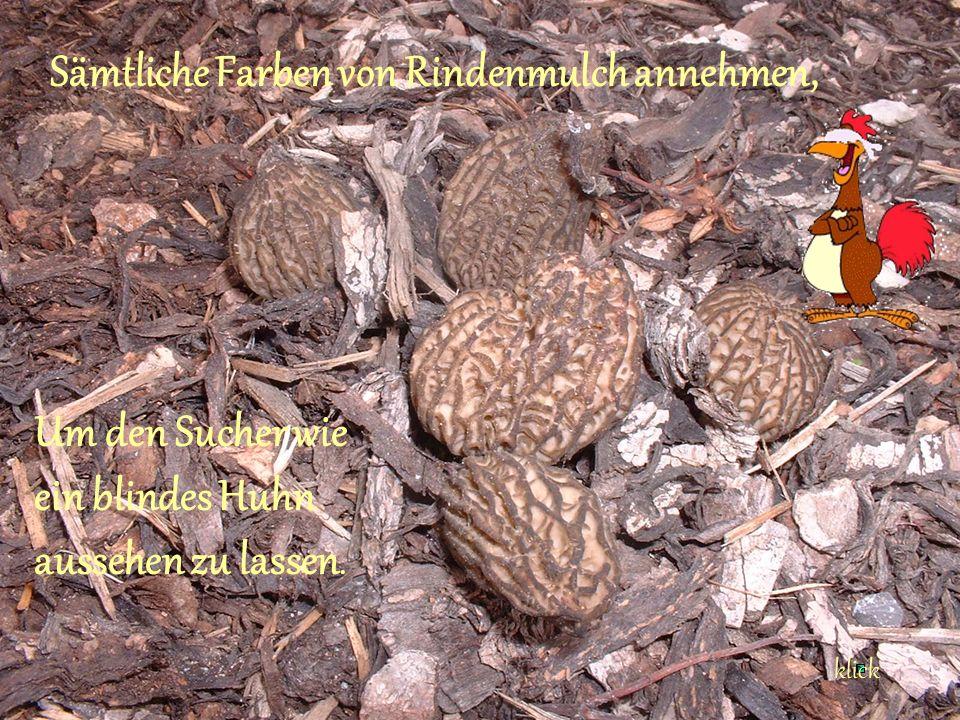 Sämtliche Farben von Rindenmulch annehmen, Um den Sucher wie ein blindes Huhn aussehen zu lassen.