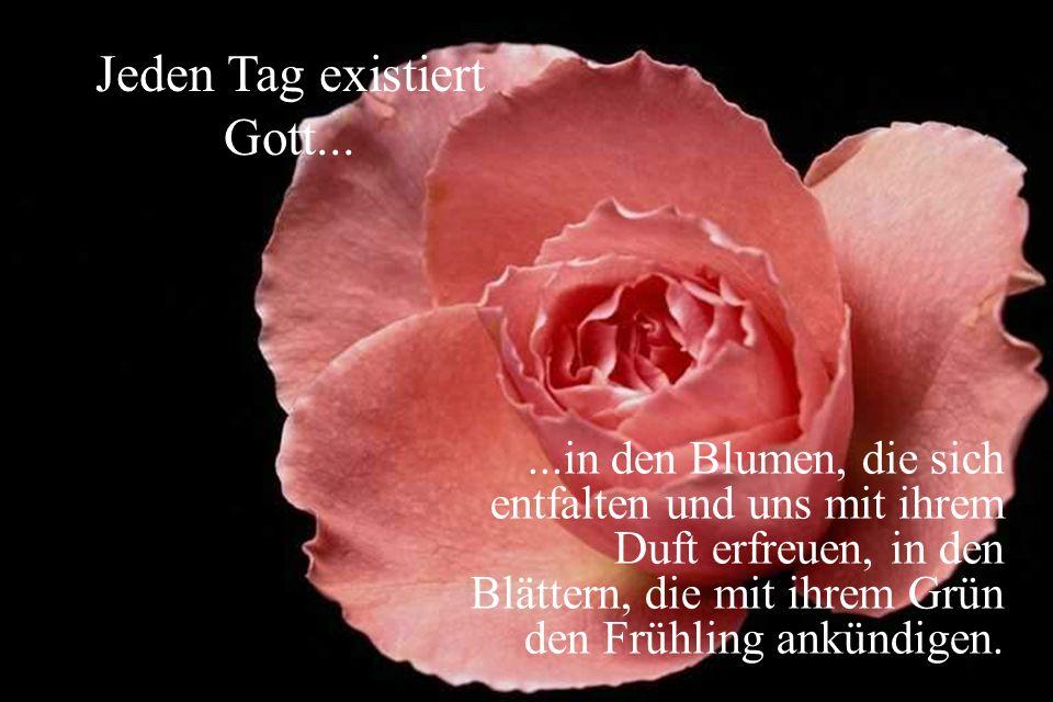...in den Blumen, die sich entfalten und uns mit ihrem Duft erfreuen, in den Blättern, die mit ihrem Grün den Frühling ankündigen.