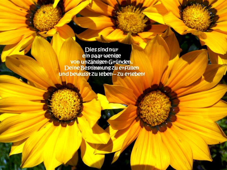 ... und das Schönste Geschenk auf Erden… eine Berührung von Gott in Menschengestalt...