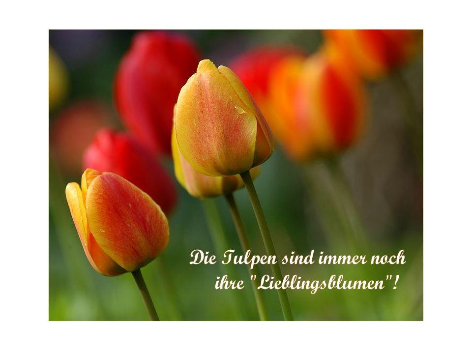 & als Tessy den nächsten Morgen fröhlich erwachte, wusste sie genau, dass sie Floristin werden wollte. Sie bedankte sich herzlich beim Universum.