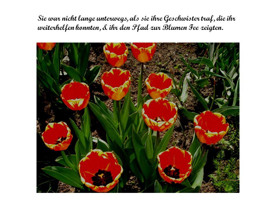 Sie war nicht lange unterwegs, als sie ihre Geschwister traf, die ihr weiterhelfen konnten, & ihr den Pfad zur Blumen Fee zeigten.