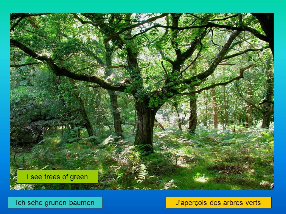 I see trees of green Japerçois des arbres verts Ich sehe grunen baumen