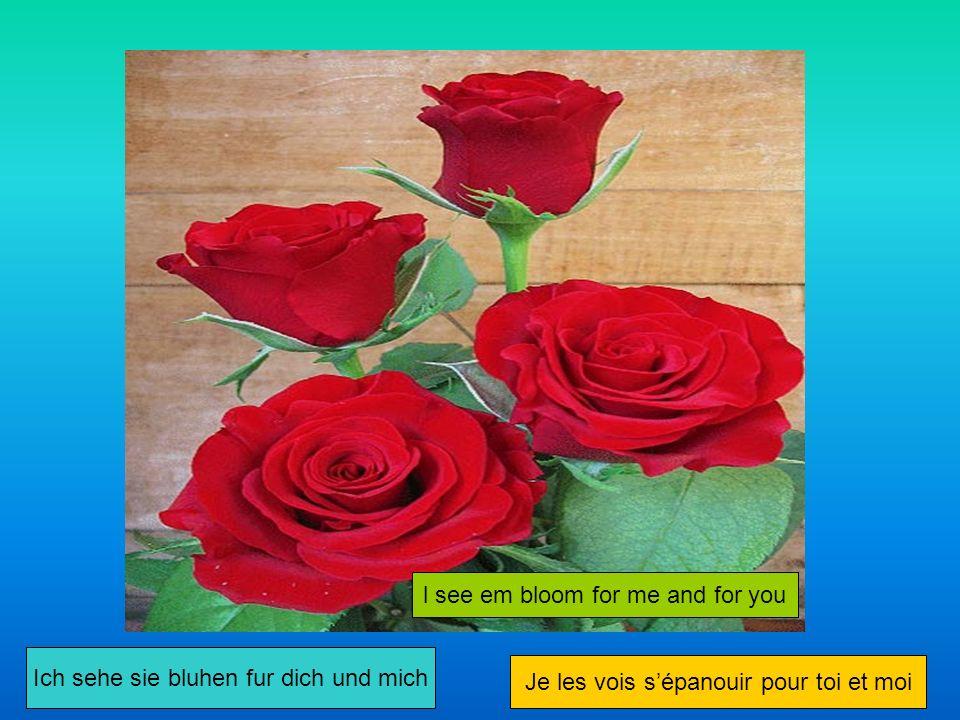Je les vois sépanouir pour toi et moi Ich sehe sie bluhen fur dich und mich l see em bloom for me and for you