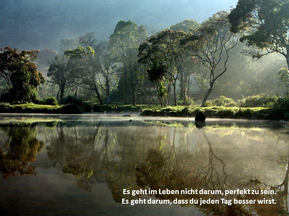 Es geht im Leben nicht darum, perfekt zu sein. Es geht darum, dass du jeden Tag besser wirst.