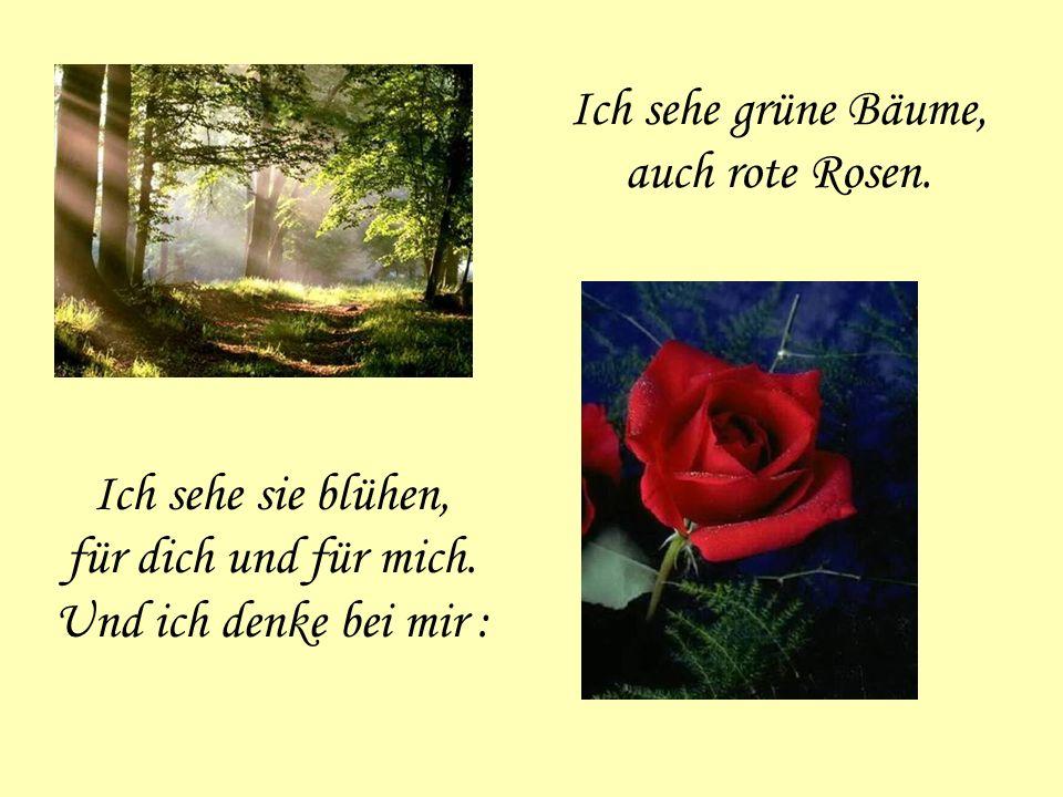 Ich sehe grüne Bäume, auch rote Rosen. Ich sehe sie blühen, für dich und für mich. Und ich denke bei mir :
