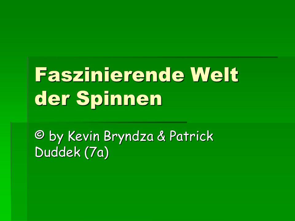 Faszinierende Welt der Spinnen © by Kevin Bryndza & Patrick Duddek (7a)