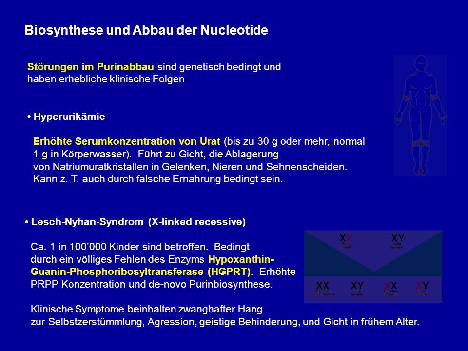 Biosynthese und Abbau der Nucleotide Störungen im Purinabbau sind genetisch bedingt und haben erhebliche klinische Folgen Hyperurikämie Erhöhte Serumkonzentration von Urat (bis zu 30 g oder mehr, normal 1 g in Körperwasser).