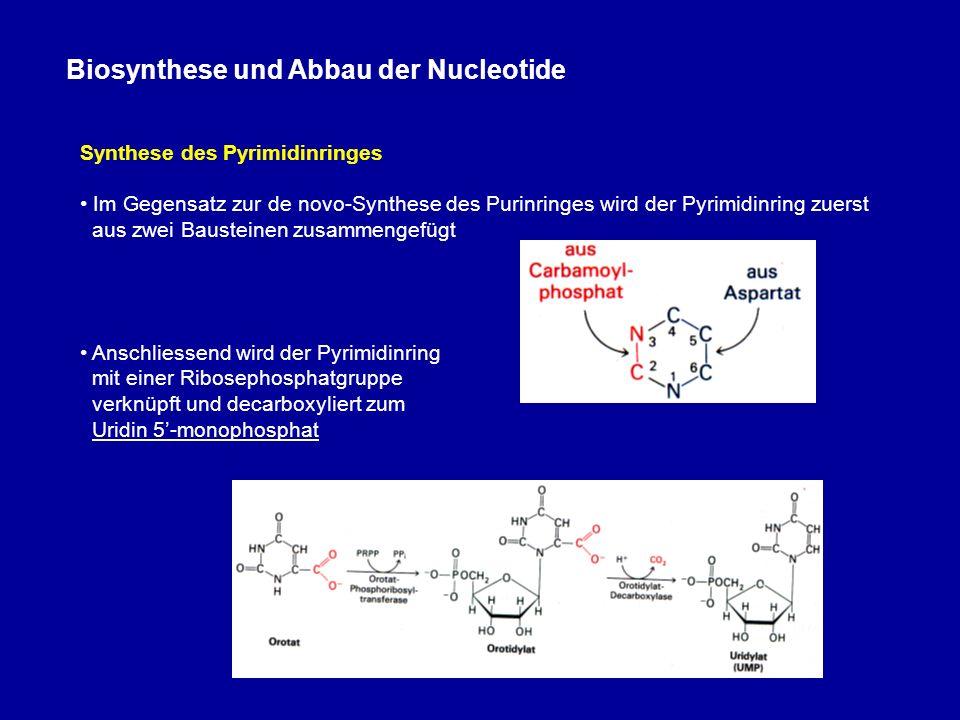 Biosynthese und Abbau der Nucleotide Synthese des Pyrimidinringes Im Gegensatz zur de novo-Synthese des Purinringes wird der Pyrimidinring zuerst aus zwei Bausteinen zusammengefügt Anschliessend wird der Pyrimidinring mit einer Ribosephosphatgruppe verknüpft und decarboxyliert zum Uridin 5-monophosphat