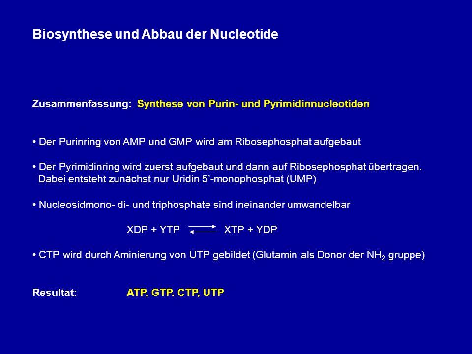 Biosynthese und Abbau der Nucleotide Zusammenfassung: Synthese von Purin- und Pyrimidinnucleotiden Der Purinring von AMP und GMP wird am Ribosephosphat aufgebaut Der Pyrimidinring wird zuerst aufgebaut und dann auf Ribosephosphat übertragen.