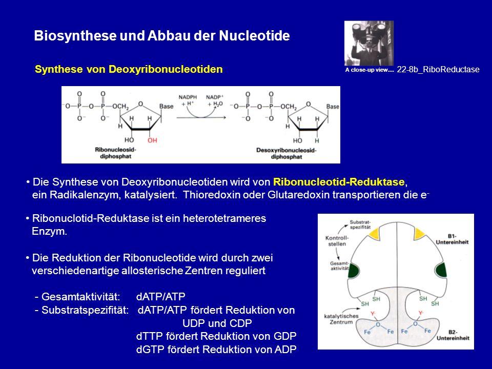 Biosynthese und Abbau der Nucleotide Die Synthese von Deoxythymidin ist ein wichtiger Angriffspunkt in der Krebschemotherapie Dihydrofolat/Tetrahydrofolat hat eine Schlüsselrolle in der Synthese von dTMP und der Purinsynthese Thymidylat-Synthase