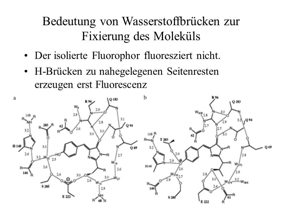 Bedeutung von Wasserstoffbrücken zur Fixierung des Moleküls Der isolierte Fluorophor fluoresziert nicht.