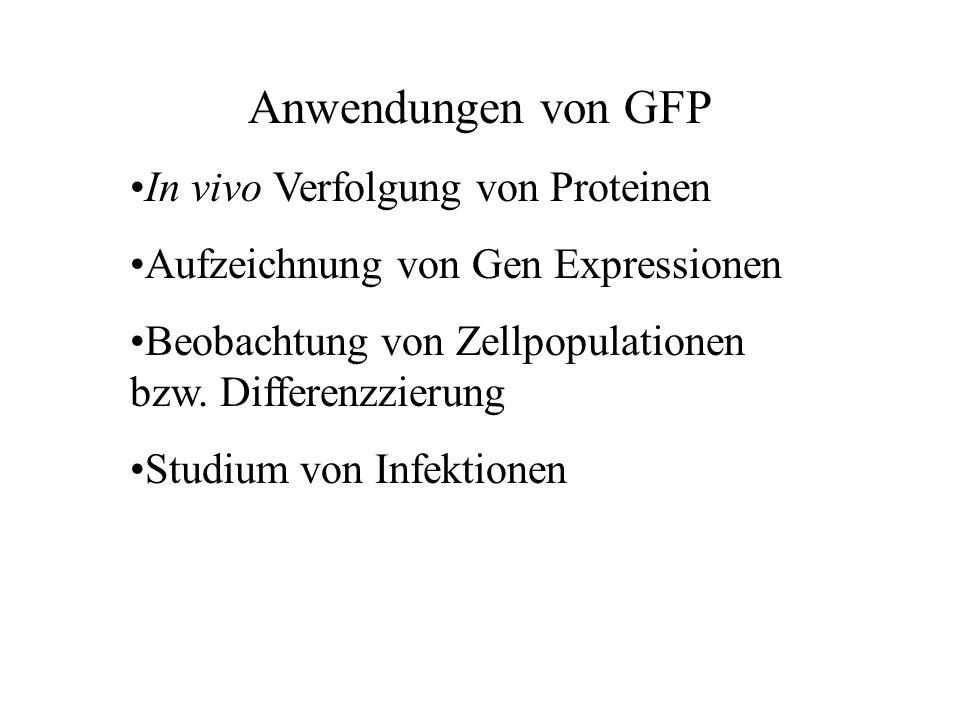 Anwendungen von GFP In vivo Verfolgung von Proteinen Aufzeichnung von Gen Expressionen Beobachtung von Zellpopulationen bzw.