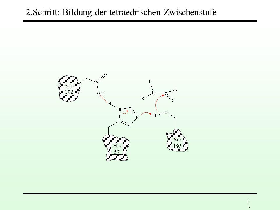 10 Asp 102 His 57 Ser 195 1. Schritt: Bildung eines Enzym-Substrat-Komplexes