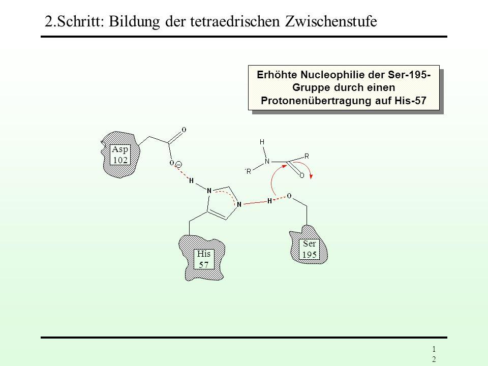 11 Asp 102 His 57 Ser 195 2.Schritt: Bildung der tetraedrischen Zwischenstufe