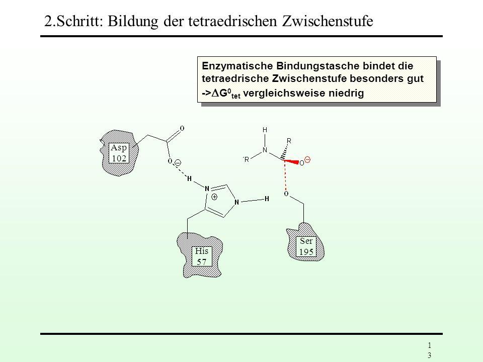 12 Asp 102 His 57 Ser 195 2.Schritt: Bildung der tetraedrischen Zwischenstufe Erhöhte Nucleophilie der Ser-195- Gruppe durch einen Protonenübertragung