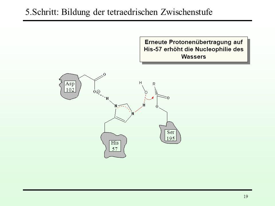Asp 102 His 57 Ser 195 5.Schritt: Bildung der tetraedrischen Zwischenstufe 18