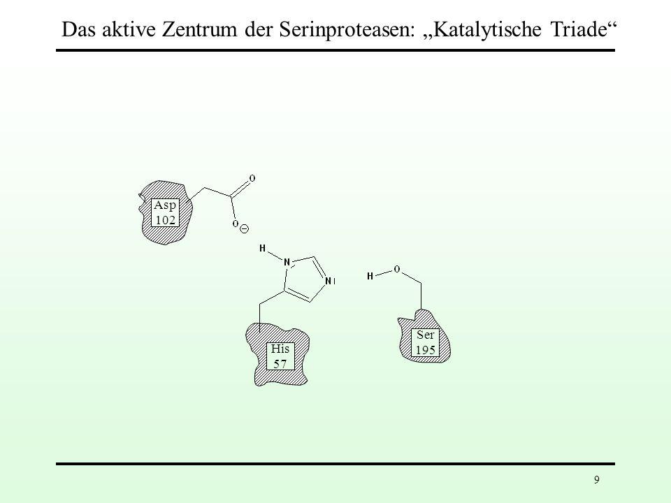 Asp 102 His 57 Ser 195 Asp 102 His 57 Ser 195 5.Schritt: Bildung der tetraedrischen Zwischenstufe Erneute Protonenübertragung auf His-57 erhöht die Nucleophilie des Wassers 19