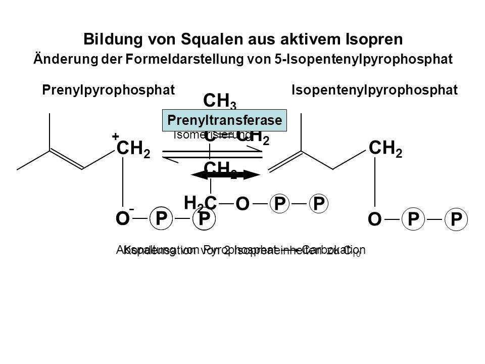 Geranylpyrophosphat (C 10 ) Abspaltung von Pyrophosphat Carbokation Kondensation von 2 Isopreneinheiten zu C 10 CH 2 O P P + Kondensation mit einem weiteren aktiven Isopren zu C 15 + CH 2 - O P P O P P O P P Farnesylpyrophosphat (C 15 ) CH 2 O P P O P P O P P Prenyltransferase