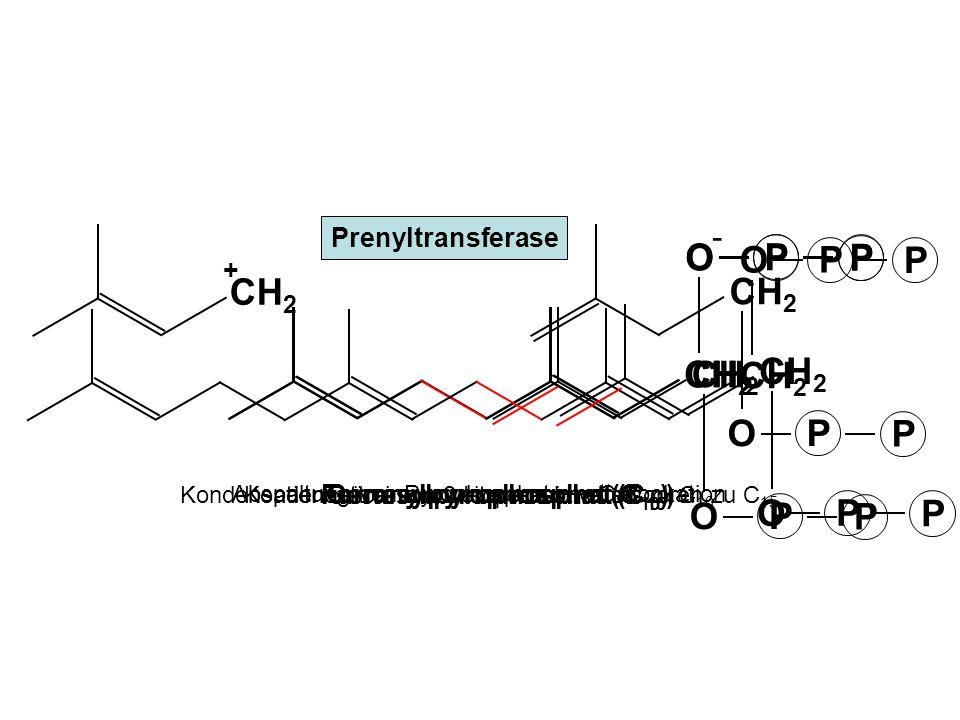 O P PCH2CH2 O P P H2CH2C -O-O P P O-O- P P NADPH +H + NADP + Farnesylpyrophosphat Kopf an Kopf – Kondensation von 2 Molekülen Farnesylpyrophosphat unter Abspaltung der beiden Pyrophosphatgruppen Squalen (C 30 ) Isoprenoide Vit.