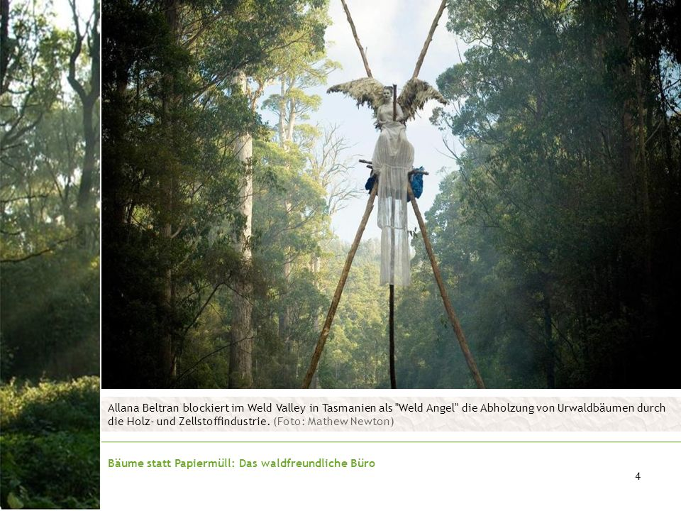 Bäume statt Papiermüll: Das waldfreundliche Büro 4 Allana Beltran blockiert im Weld Valley in Tasmanien als