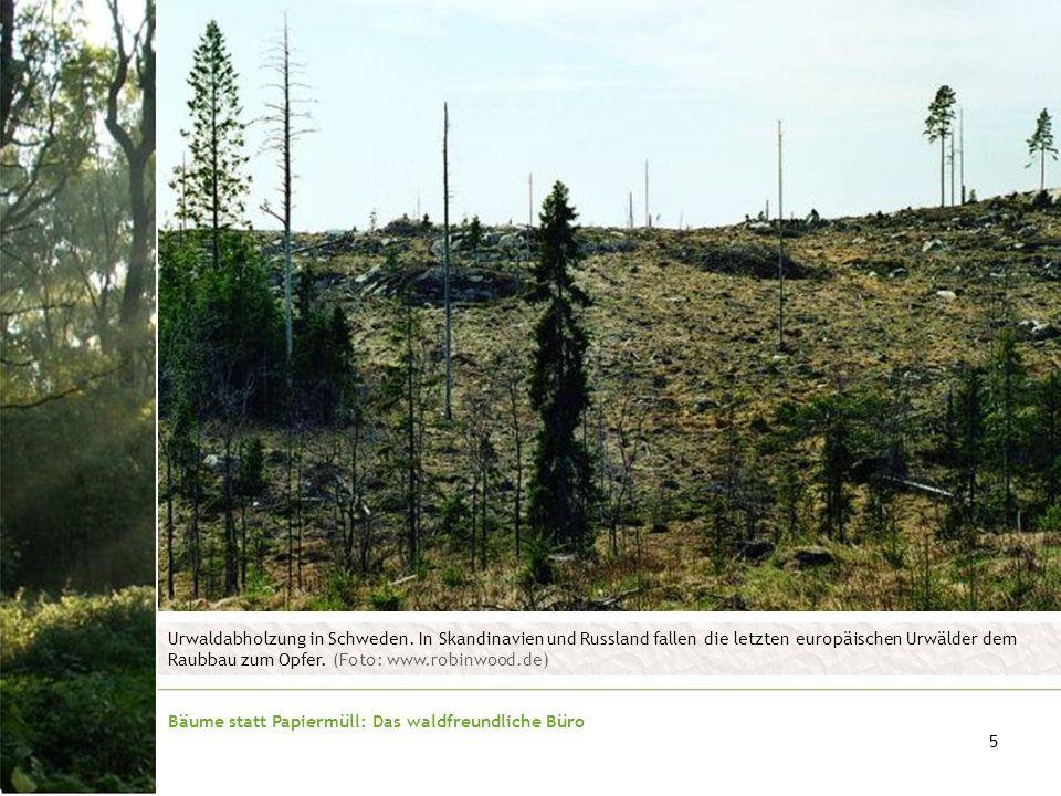Bäume statt Papiermüll: Das waldfreundliche Büro 5 Urwaldabholzung in Schweden. In Skandinavien und Russland fallen die letzten europäischen Urwälder
