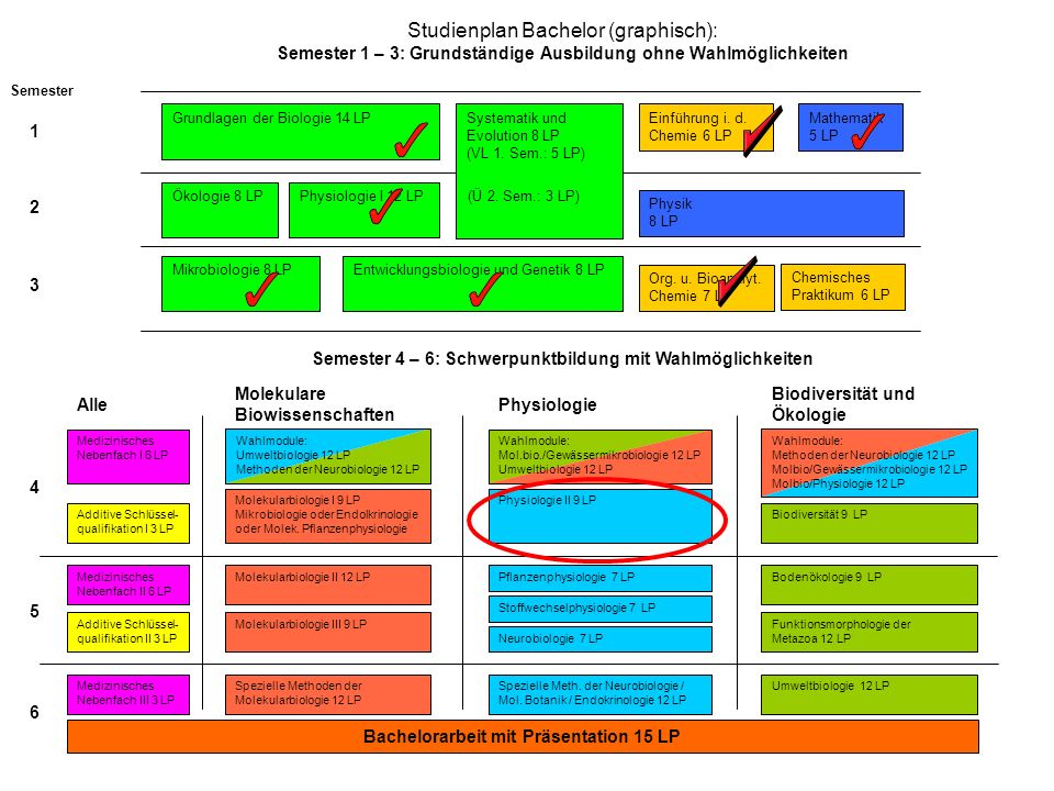 Studienplan Bachelor (graphisch): Semester 1 – 3: Grundständige Ausbildung ohne Wahlmöglichkeiten Grundlagen der Biologie 14 LPMathematik 5 LP Einführung i.
