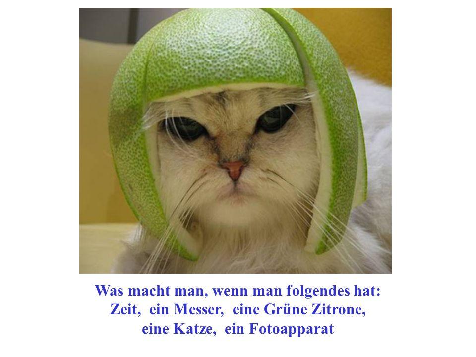 Was macht man, wenn man folgendes hat: Zeit, ein Messer, eine Grüne Zitrone, eine Katze, ein Fotoapparat
