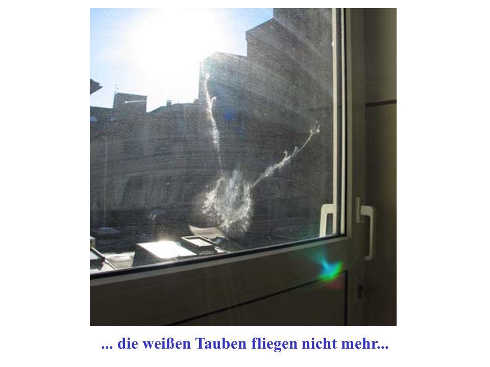 ... die weißen Tauben fliegen nicht mehr...