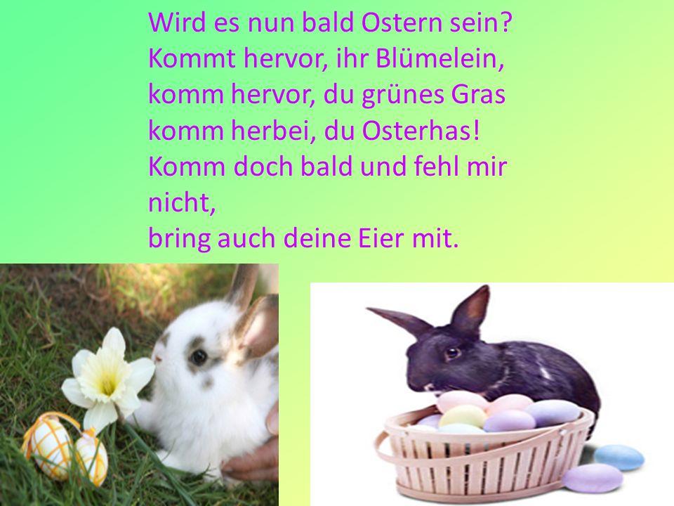 13 Wird es nun bald Ostern sein? Kommt hervor, ihr Blümelein, komm hervor, du grünes Gras komm herbei, du Osterhas! Komm doch bald und fehl mir nicht,