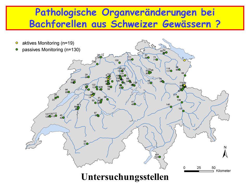 Pathologische Organveränderungen bei Bachforellen aus Schweizer Gewässern ? Untersuchungsstellen
