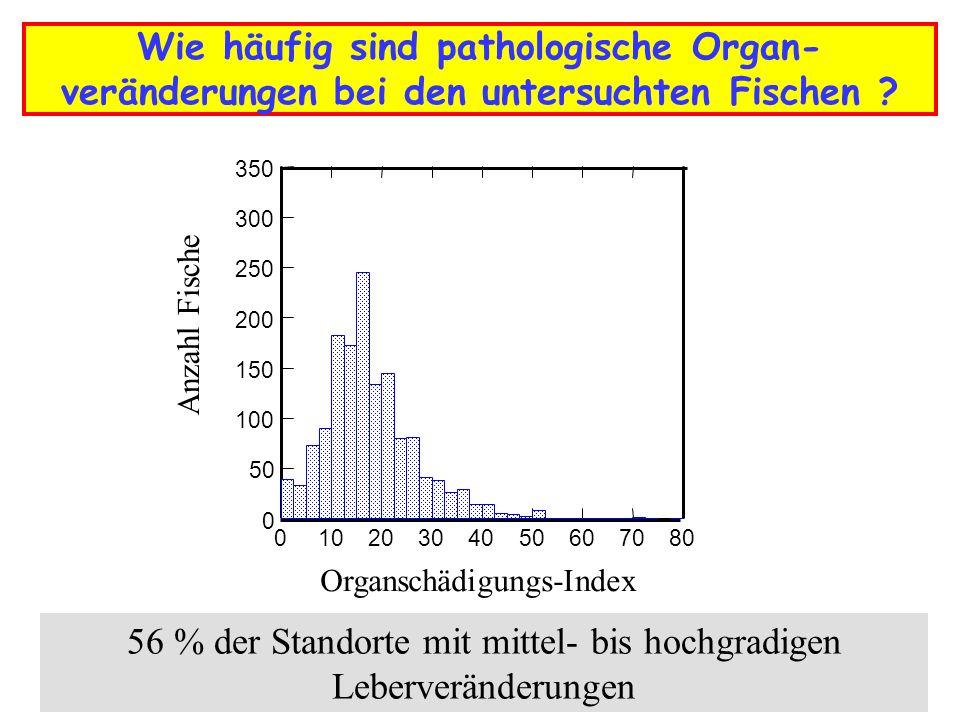 Wie häufig sind pathologische Organ- veränderungen bei den untersuchten Fischen ? 01020304050607080 Organschädigungs-Index 0 50 100 150 200 250 300 35