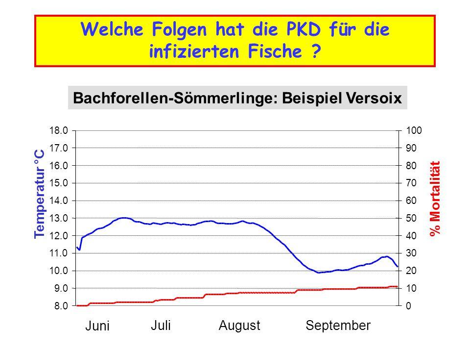 Bachforellen-Sömmerlinge: Beispiel Versoix 8.0 9.0 10.0 11.0 12.0 13.0 14.0 15.0 16.0 17.0 18.0 Temperatur °C 0 10 20 30 40 50 60 70 80 90 100 % Mortalität Juni JuliAugustSeptember Welche Folgen hat die PKD für die infizierten Fische ?