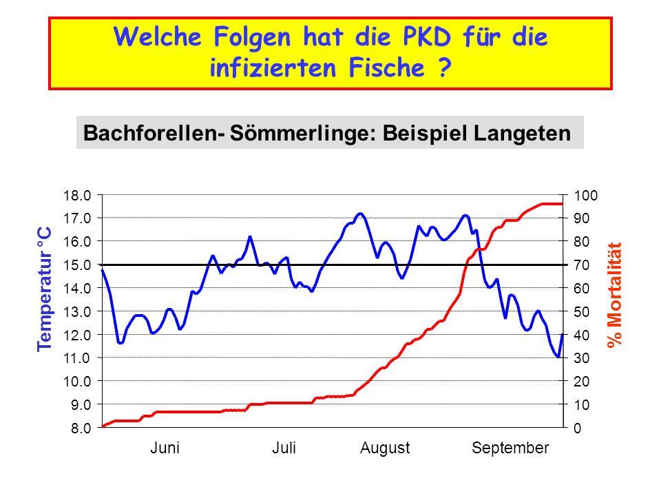 8.0 9.0 10.0 11.0 12.0 13.0 14.0 15.0 16.0 17.0 18.0 Temperatur °C 0 10 20 30 40 50 60 70 80 90 100 % Mortalität JuniJuliAugustSeptember Bachforellen-