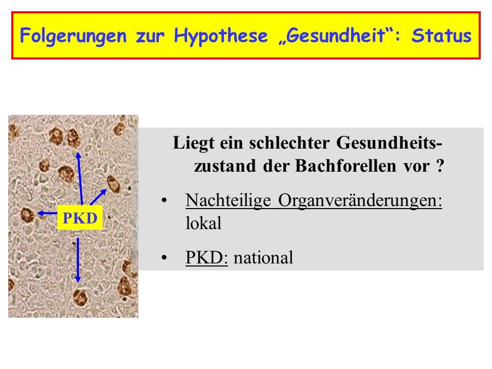 Folgerungen zur Hypothese Gesundheit: Status PKD Liegt ein schlechter Gesundheits- zustand der Bachforellen vor .