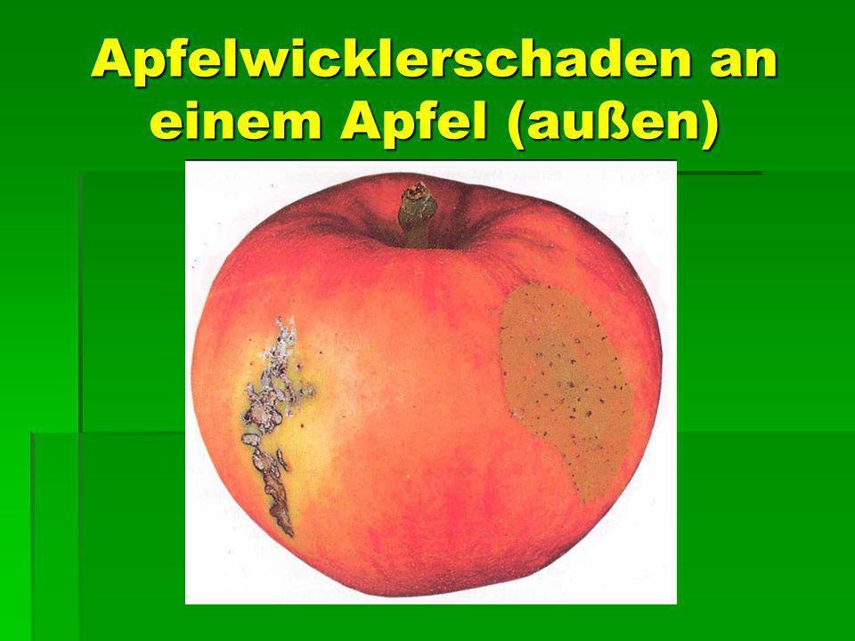 Apfelwicklerschaden an einem Apfel (außen)