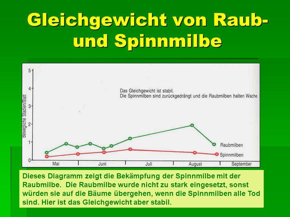 Gleichgewicht von Raub- und Spinnmilbe Dieses Diagramm zeigt die Bekämpfung der Spinnmilbe mit der Raubmilbe. Die Raubmilbe wurde nicht zu stark einge