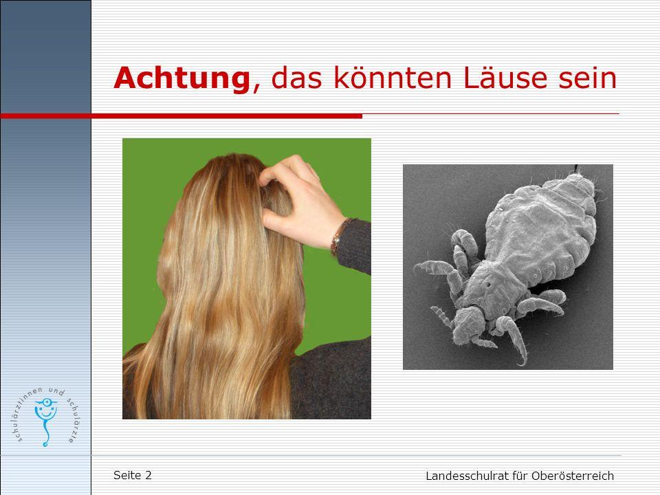 Seite 2 Landesschulrat für Oberösterreich Achtung, das könnten Läuse sein